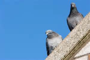 pigeon deterrents for home use bird b gone inc
