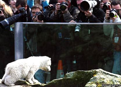 Science Monday Knut Is An Animal Psychopath by News In Pictures In Pictures Knut S Story