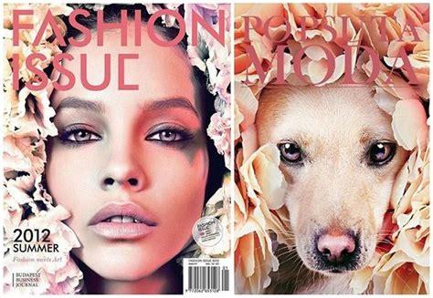 puppy adoption ta glamorous pet adoption editorials po psu ta moda
