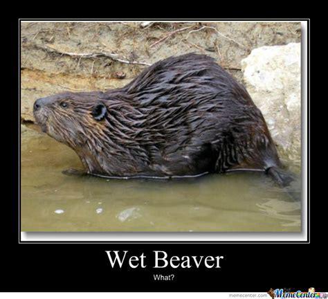 Wet Meme - wet beaver by loupland meme center