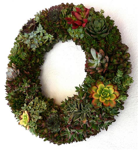 living wreath how to make a living wreath with succulents a storybook life