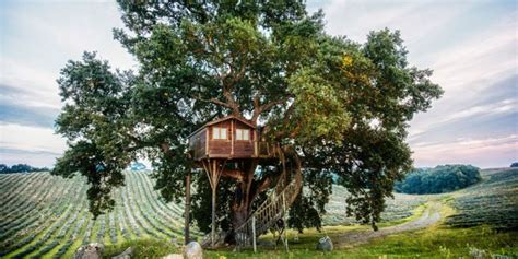 amazing treehouses   rent    tree