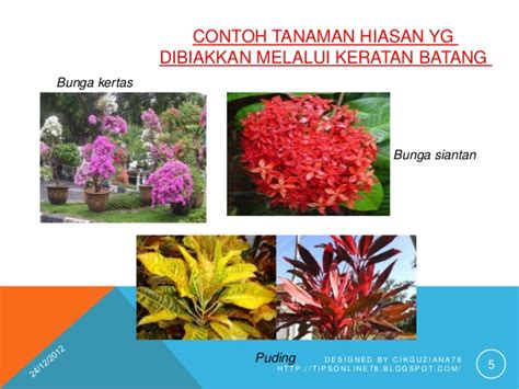 Hiasan Dinding Dahan bab 6 tanaman hiasan ting 1
