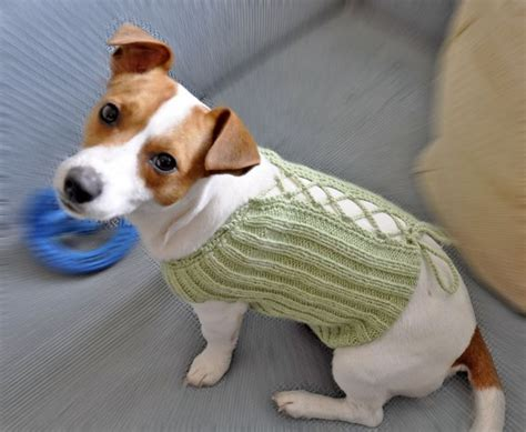 knitting pattern dog coat jack russell 21 best images about knitted dog sweaters on pinterest