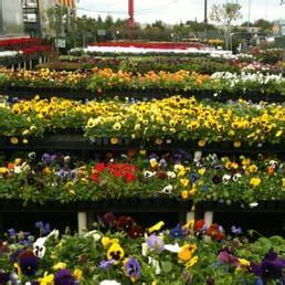 Flower Gardens In Houston Houston Garden Center 13 Avis Jardinerie P 233 Pini 232 Re 525 W Grand Pkwy S Katy Tx 201 Tats