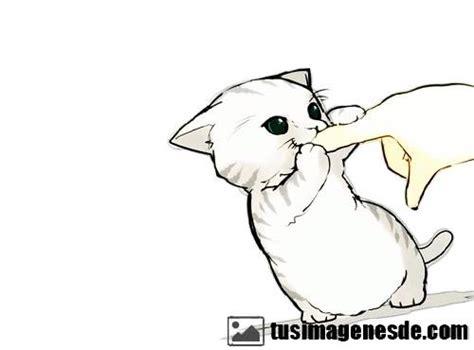 imagenes kawaii de gatos im 225 genes de gatos kawaii im 225 genes