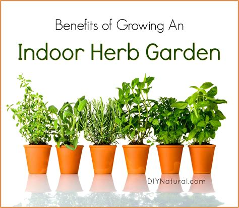 herbs indoors indoor herb garden 5 reasons you should be growing herbs