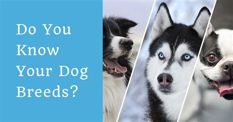 breed identification quiz breed quiz can you identify the breed