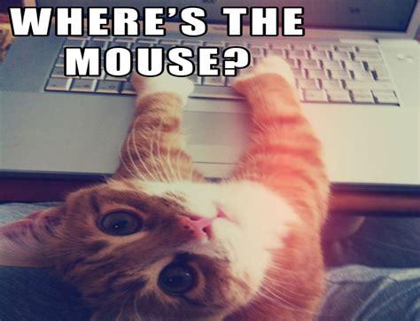 Funny Computer Meme - cat meme quote funny humor grumpy computer wallpaper