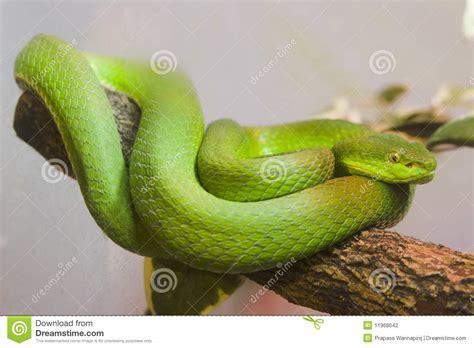 imagenes de serpientes verdes sola serpiente verde colorida foto de archivo imagen