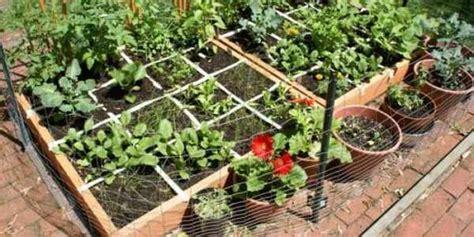 orto in giardino come fare come creare un orto in appena un metro quadrato