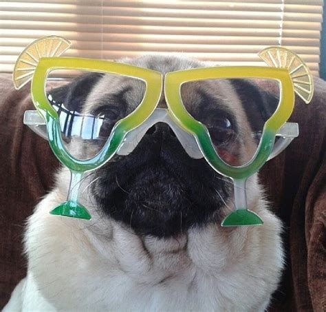 national pug day 2017 9 recipes to help you celebrate national margarita day miami food pug