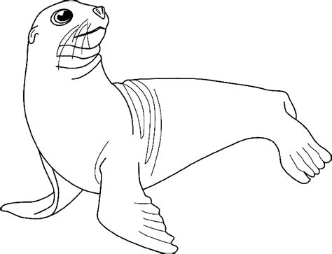 free drawings of seals coloring pages