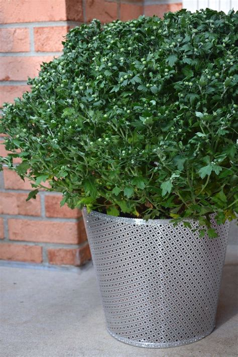 Wire Garden Planters by How To Make Your Own Diy Garden Planters From Metal