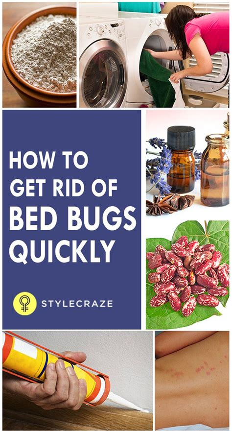 rid  bed bugs miscellaneous rid  bed bugs bed bug spray bed bug remedies