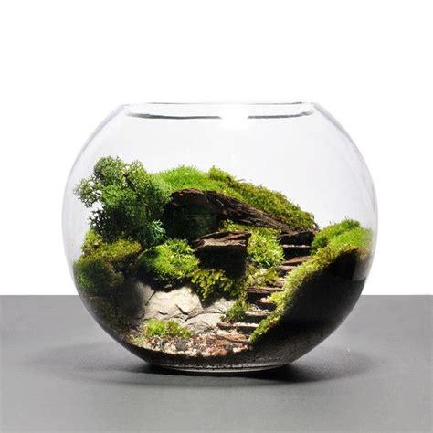 biosphere terrarium steps desks pinterest products