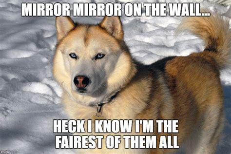 Siberian Husky Meme - 8 funny siberian husky memes what every dog deserves