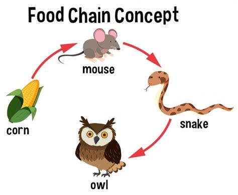 cadenas alimenticias en ingles cadena alimentaria fotos y vectores gratis