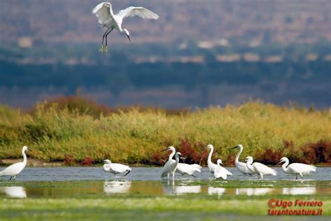 regione puglia ufficio parchi la riserva naturale regionale orientata palude la vela
