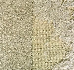 motten teppich get rid of carpet moths information on carpet moth