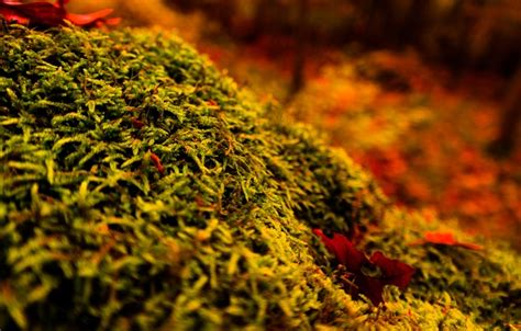 wallpaper wood tree autumn forest moss stump images
