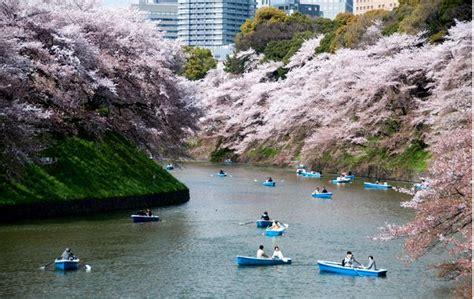 meteo co dei fiori 15 giorni clima estivo in giappone quot quot da record a tokyo foto
