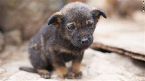 stray puppy help strays without taking them in cnn