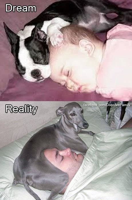 bed or bed hog the realities of sleeping with dogs