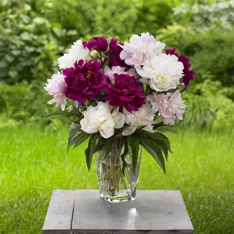 long lasting cut flowers hgtv gardens grand central floral