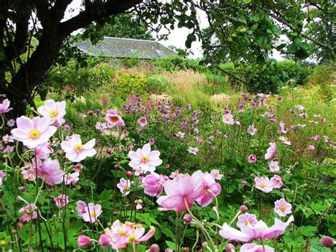 Garden Of Uk Snowdrop Gardens Snowdrop Walks And Where To See Them