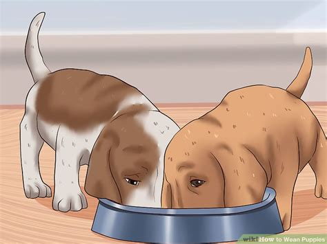 what age to wean puppies how to wean puppies 10 steps with pictures wikihow