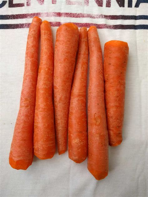 are carrots for dogs meditation 101 carrot dogs