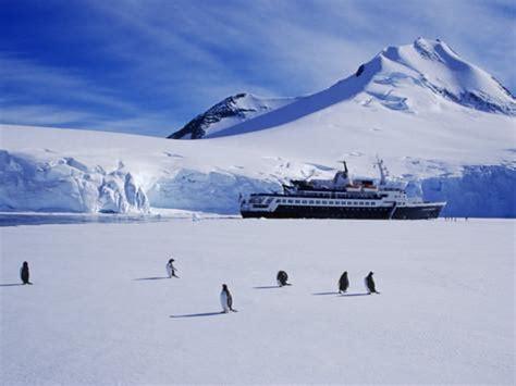 Decorative Wall Murals wiencke island port lockroy gentoo penguins on sea ice