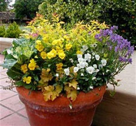 Starting Your Container Garden   Garden.org
