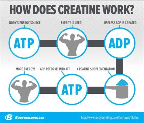 creatine health risks feiten omtrent creatine bodynet nl bodybuilding