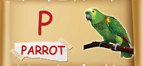 for for p for parrot usefuldesk