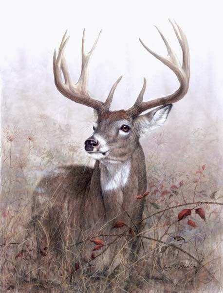 Deer in art | Whitetailed Deer and other wildlife art by ... Whitetail Buck Drawings
