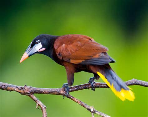 southern mexico birding tour eagle eye tours