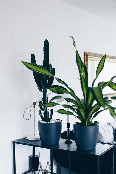 Zimmerpflanzen Die Wenig Wasser Brauchen by Der Pflanzen Guide 15 Stylische Und Pflegeleichte