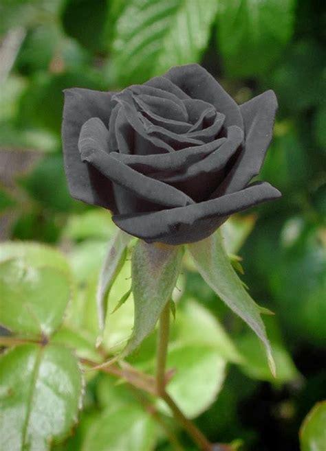 imagenes wasap rosa m 225 s de 25 ideas incre 237 bles sobre flores bonitas para wasap