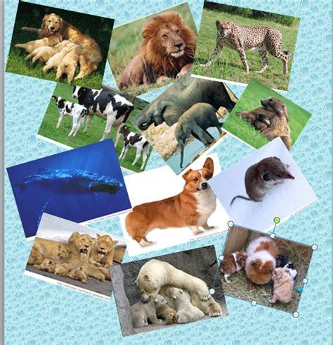 imagenes de animales vertebrados mamiferos caracter 205 sticas de los animales vertebrados mam 205 feros