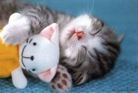 pictures: top 10 picture of cute cat