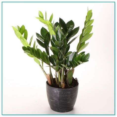 indoor plants for low light vine plants with flowers