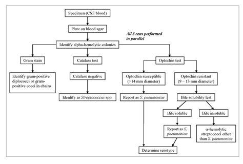 streptococcus flowchart bacteria flow chart car interior design