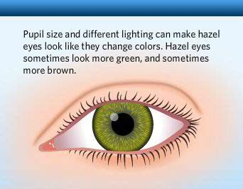 what is the most common form of color blindness best 25 eye color charts ideas on baby eye