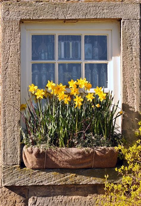 Cottage Window Boxes by Hydrangea Hill Cottage A World Of Windowboxes
