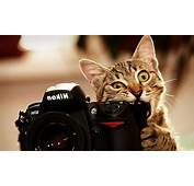 Cats Cat Wallpapers Pussycat Images Eye Cute