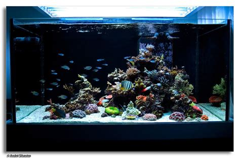 Aquascaping Live Rock Ideas Salt Water Rocks Aquariums Aquarium Design Ideas