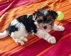 canile pavia cuccioli regalo 5 cuccioli in canile regalo cuccioli cani