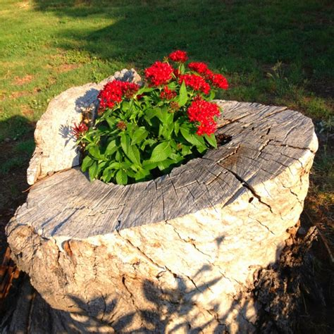 Stump Planter by Tree Stump As A Planter For The Home